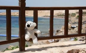 Картинка море, улыбка, настроение, отдых, игрушка, мишка, Египет, путешествие