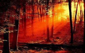 Обои красный, деревья, Свет