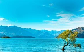 Картинка горы, озеро, дерево, mountains, lake, tree