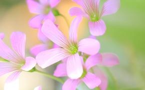 Картинка поле, цветы, растение, лепестки, луг