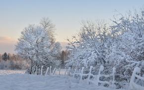 Обои деревья, забор, снег, мороз, зима, утро