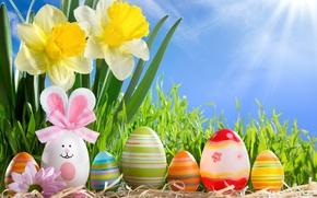 Картинка трава, солнце, цветы, яйца, весна, пасха, sunshine, happy, flowers, нарциссы, spring, eggs, easter