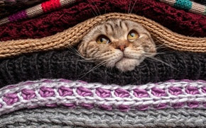 Картинка eyes, Cat, animal, funny, cute, situation, pet, head, covered, mustache, nose, gaze, sweater, wool