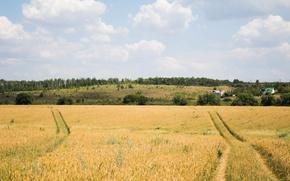 Картинка дорога, поле, небо