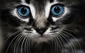 Картинка кошка, глаза, кот, мордочка