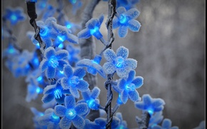 Картинка зима, иней, снег, цветы, мороз, голубые, гирлянда, фонарики