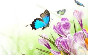 Картинка бабочки, цветы, блики, весна, крокусы