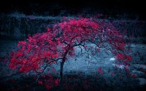 Картинка осень, листья, свет, туман, дерево, багрянец