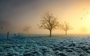 Обои иней, трава, солнце, деревья, птицы