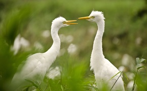 Картинка зелень, птицы, природа