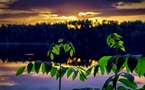 Картинка пейзаж, закат, ветки