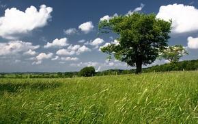 Обои дерево, небо, зелень, поле