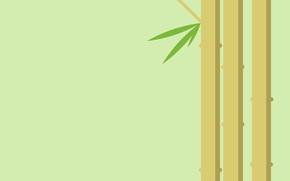 Обои листья, растение, бамбук, стебель