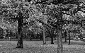 Картинка черно-белая, Забор, Деревья, Ветви, Листва