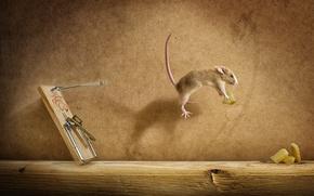 Картинка сыр, мишь, мышеловка, полёт