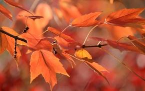 Картинка осень, листья, паутина, ветка