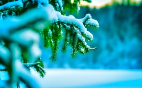 Картинка холод, зима, макро, снег, иголки, природа, елка, веточки