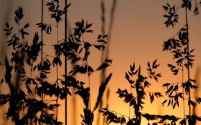 Картинка трава, закат