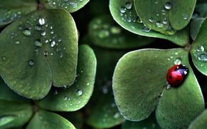 Картинка листья, зеленый, жук