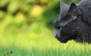 Картинка кошка, природа, мышка