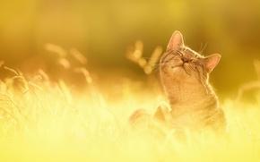 Картинка трава, солнце, счастье, природа, Кот