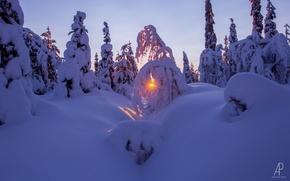 Картинка зима, лес, солнце, снег, природа
