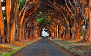 Картинка дорога, свет, деревья, парк