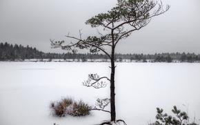 Картинка зима, снег, природа, дерево, хвойные, заснежено