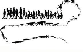 Картинка звери, человек, обезьяна, эволюция