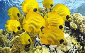 Картинка sea, ocean, nature, water, animal, fish, reef, America, sugoi, subarashii, coral, tourism, Costa Rica, tropical …