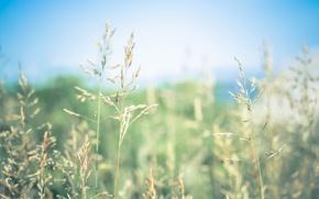 Картинка grass, bokeh, sunny, seeds, stalks