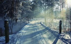 Картинка зима, дорога, лес, снег, пейзаж, собака