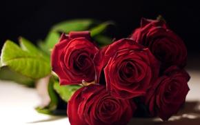 Обои розы, бутоны, букет