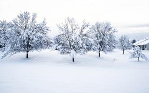 Картинка Winter, trees, snow, houses