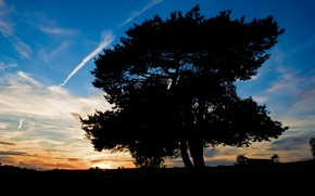 Обои дерево, небо, тень, закат