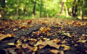 Картинка дорога, осень, асфальт, листья, макро, природа, желтые, размытость, сухие, опавшие, боке