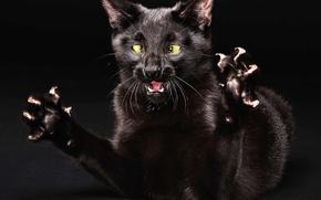 Картинка кошка, лапы, бешенная
