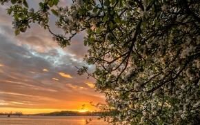 Картинка закат, ветки, река, дерево, Швеция, яблоня, цветение, Sweden, Göta Älv River, река Гёта-Эльв