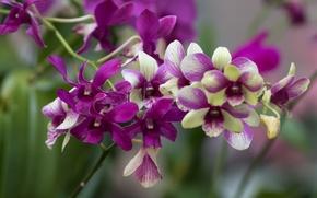 Обои ветка, орхидеи, экзотика