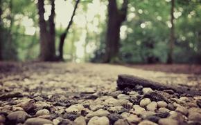 Картинка дорога, лес, природа, боке