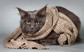 Картинка кот, взгляд, чёрный, шарф