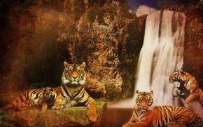 Картинка вода, кошки, горы, фон, скалы, водопад, хищники, Тигры