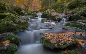 Картинка осень, лес, листья, река, камни, мох, Бельгия, Belgium, Арденны, Hoëgne River, Ardennes, Арденнский лес