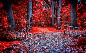 Обои краски, парк, мост, деревья, листья, багрянец, осень, лес