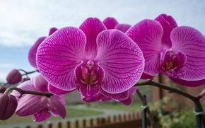 Обои орхидея, ветка, экзотика, макро