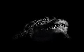 Картинка черно-белый, крокодил