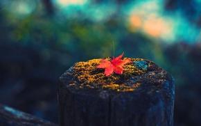 Картинка осень, макро, лист, пенёк