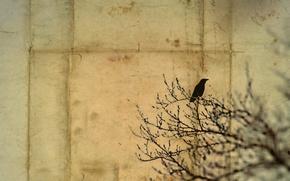 Картинка письмо, стиль, фон, птица