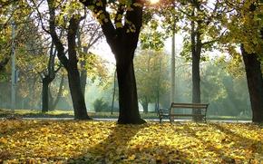 Картинка park, tree, bench