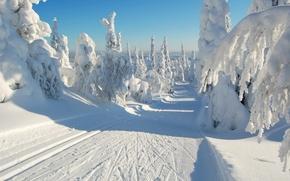Картинка зима, дорога, лес, небо, снег, деревья, ель